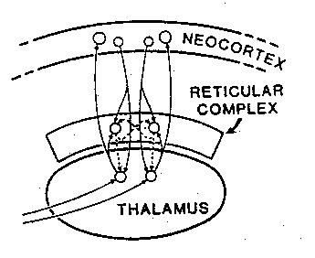 reticular