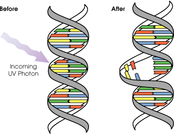 DNA_UV_mutation